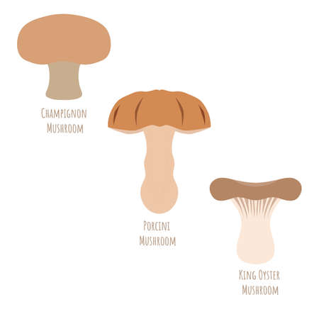 Set with Porcini Mushroom, Champignon and King Oyster isolated on white, made in flat style. Symmetrical shape filled with color only. Colorful vector illustration for product design, web and print. 矢量图像