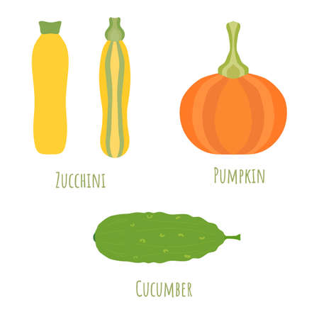 Yellow and striped zucchini, pumpkin and cucmber isolated on white and made in flat style. Symmetrical shapes filled with color only. Colorful vector illustration for product design, web and print. 矢量图像