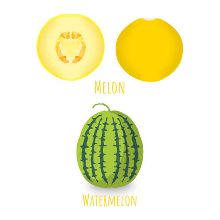 Halved and whole melons isolated on white background. Striped , vibrant apricot with little tail. Vibrant yellow melon with seeds. Flat vector with shadows. 矢量图像