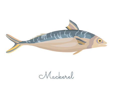 One Isolated Mackerel fish made in flat style. Colored Mackerel without outlines, with light glare and shadows. Fresh fish, seafood product, healthy source of protein and other nutrients.