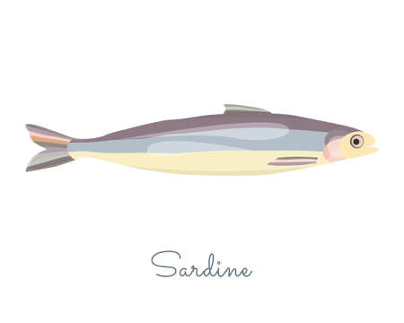 One Isolated Sardine fish made in flat style. Colored Sardine without outlines, with light glare and shadows. Fresh fish, seafood product, healthy source of protein and other nutrients.