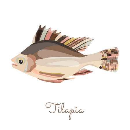 One Isolated Tilapia fish made in flat style. Colored Tilapia without outlines, with light glare and shadows. Fresh fish, seafood product, healthy source of protein and other nutrients.