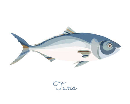 One Isolated Tuna fish made in flat style. Colored Tuna without outlines, with light glare and shadows. Fresh fish, seafood product, healthy source of protein and other nutrients.