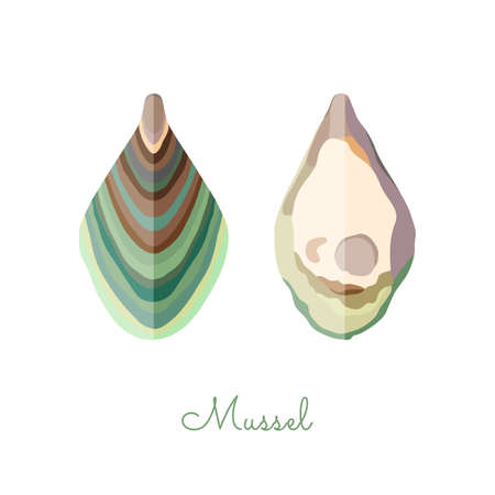 Open Mussel shells made in flat style. Colored Mussel without outlines, with geometrical shadows. Fresh mollusk, seafood product, source of healthy protein