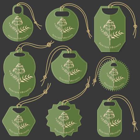 Set of Green Tags on the Dark Background Made in Flat Style with Passiflora Incarnata Herb silhouette. Isolated Group of Hang Tags for Herbal Product Packaging.