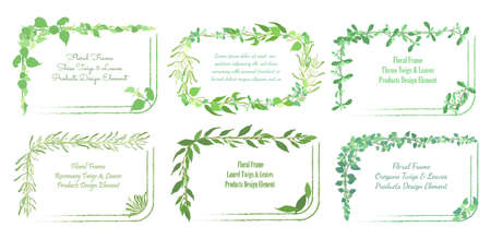 Squarish Frames with Rounded Corners and Hand Drawn Culinary Herb Twigs and Leaves. Laurel, Oregano, Thyme, Rosemary and Shiso in the Rectangular Frames. Rough Brush Strokes for Square Sides. Illusztráció