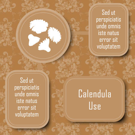 Inforgraphic Board for Traditional and Scientific Herbal Medicine Study. Calendula Commonly Used Parts and Boards for Description. Vintage Design with Floral Seamless Pattern as Background.