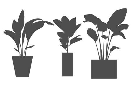 Three pot flowers icons isolated on white. Plants with big leaves. Simple gemotric shape pots. Black icons isolated on the white background.