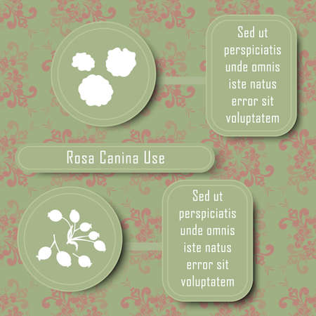 Inforgraphic Board for Traditional and Scientific Herbal Medicine Study. Rosa Canina Commonly Used Parts and Boards for Description. Vintage Design with Floral Seamless Pattern as Background.