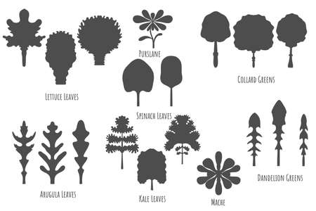 Big set with icons of the various greens made in flat style. Dark grey, No outlined Symmetrical Leaf shapes. Vector illustration for product design, web and print usage.
