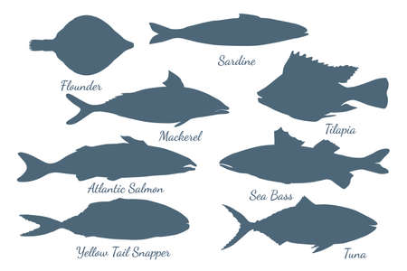 Icons with different sea fishes made in flat style. Group of fishes with flounder, sardine, tuna, sea bass, mackerel, yellow tail snapper, tilapia and Atlantic salmon. EPS10 vector illustration.