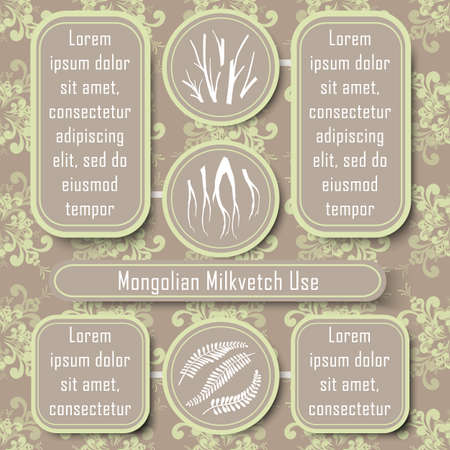 Inforgraphic Board for Traditional and Scientific Herbal Medicine Study. Mongolian Milkevitch Commonly Used Parts and Boards for Description. Vintage Design with Floral Seamless Pattern as Background.