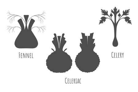 Icons of the whole and halved celeriac, fennel and celery isolated on white, made in flat style. Dark grey symmetrical shapes. Vector illustration for product design, web and print usage. Illusztráció