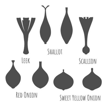 Icons of the leek, shallot, scallion, red and sweet yellow onions. Dark grey sSymmetrical shapes. Vector illustration for product design, web and print usage.