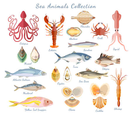 Big set with sea creatures isolated on white. Crustaceans, sea and ocean fishes, seashells gathered in one set. flat vector illustration.