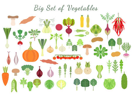 Big set with a various types of vegetables. Green vegetables, roots, squashes, mushrooms, tomato and other. Colorful symmetrical flat vector illustrations. Illusztráció