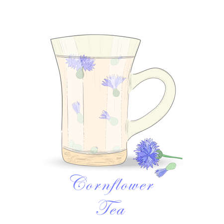 Hand Drawn Isolated Glass Cup with Herbal Tea. Herbale Tea with Cornflower flowers. Transparent Glass Cup. Vector Illustration for Web and Print Usage.