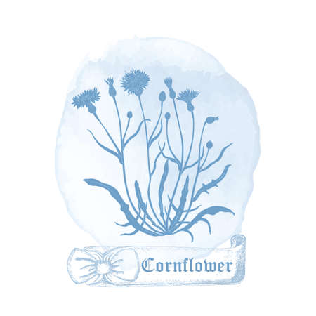 Badge with Cornflower Plant and Watercolor Spots