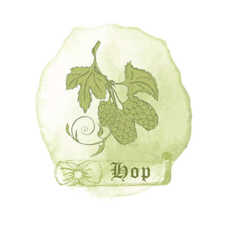 Badge with Humulus lupulus and Watercolor Spots Illusztráció