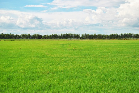 The field that far away from the city Stock Photo - 8710109