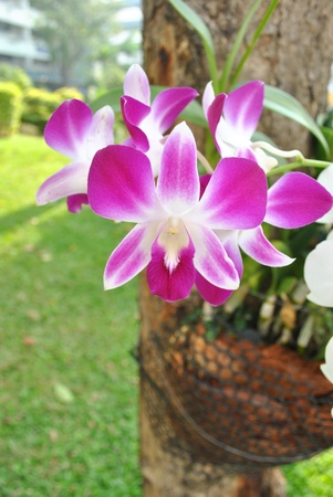 The orchid is grow on the tree Stock Photo - 8932838