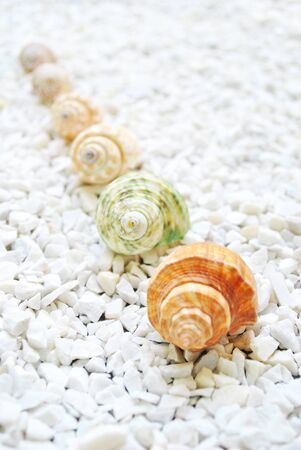 The shell are on the white stone photo