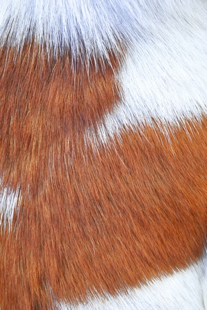 The brown and white color animal fur photo