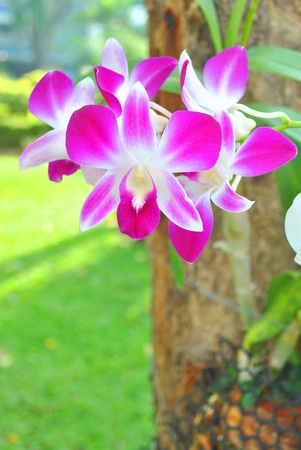 Orchid growing on the tree Stock Photo - 9579407