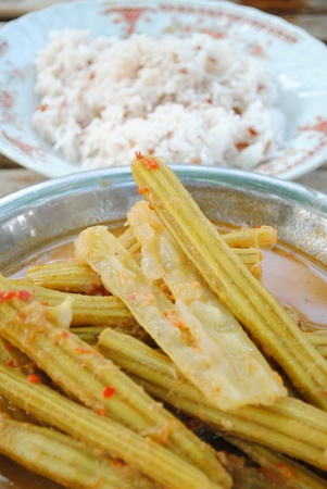 drumstick tree: Hot and sour curry from drumstick tree Stock Photo