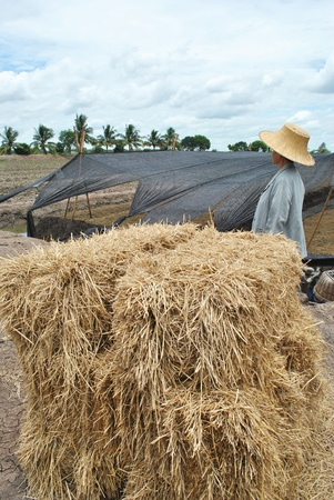 Thai farmer and pile of straw by rice photo