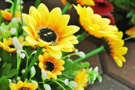 Beautiful sun flower with leaf in garden photo