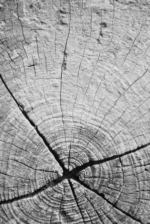 Old texture surface background break wood log