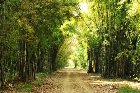 The beautiful green forest with walk way