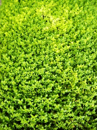 Texture background surface green fresh artificial grass           photo