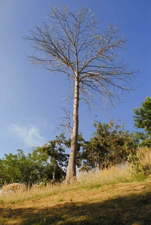 cheerless: A cheerless tree is in the forest
