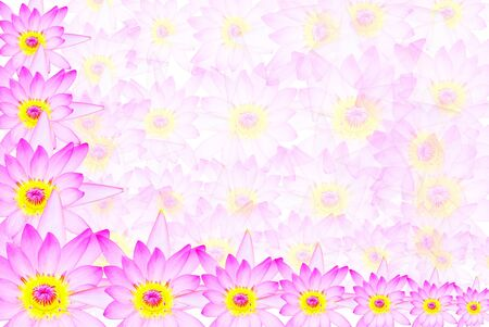 The pink lotus texture is very beautiful Stock Photo - 16242310