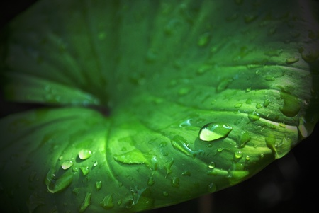Drop of water on the lotus leaf with beautiful in sunlight