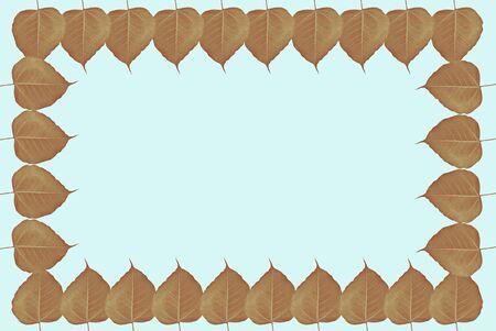 texture: Isolated leaf texture
