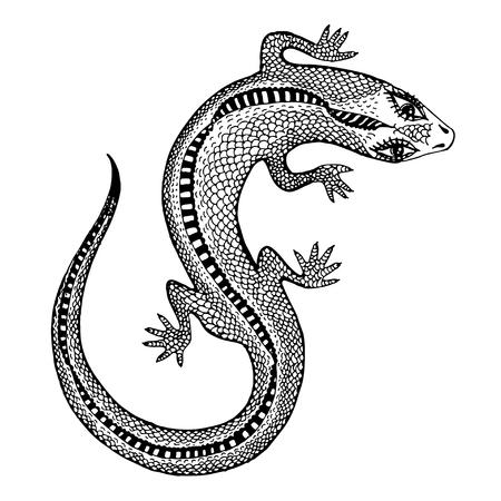 Hand gezeichnete Silhouette einer detaillierten exotischen wilden Eidechse. Tierreptil für Druck und Tätowierung. Isolierte Vektornaturkunst. Vektorgrafik