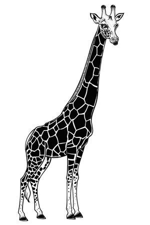 Jirafa, animal africano manchado de cuello largo. Arte de la naturaleza, tatuajes exóticos, estampados, diseño de camisetas. Ilustraciones vectoriales aisladas. Ilustración de vector