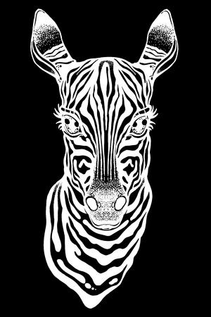 Big eyed cute Zebra head. African animal hand drawn portrait. Isolated vector illustration. Nature savanna tattoo, striped t-shirt design.