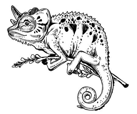 Lézard caméléon sur une branche d'arbre. Croquis dessiné à la main d'un reptile tropical. Illustration vectorielle isolée. Emblème de T-shirt, tatouage dans le style doodle. Illustration vectorielle isolée. Vecteurs