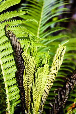 Fern leaves movement and texture in the summer sunlight. Exotic forest. Banco de Imagens