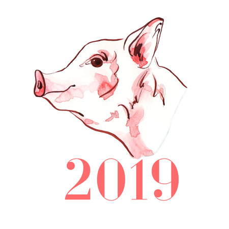 Pig watercolor illustration of hand-painted. Symbol of New Year 2019. Portrait of farm animals profile. Drawn sketch isolated on white background.