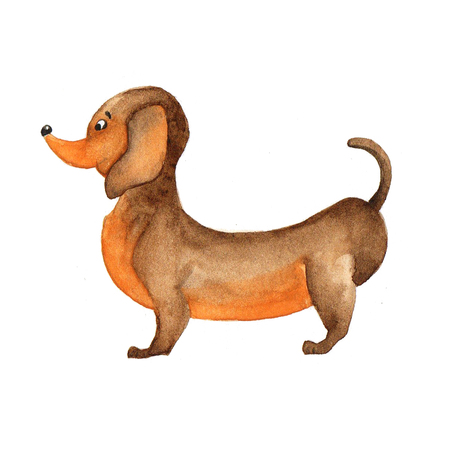 The poster of watercolor portrait Dachshund. Symbol  Chinese New Year. Stock Illustration.