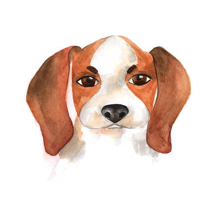 The poster of watercolor portrait BEAGLE. Symbol  Chinese New Year. Stock Illustration.