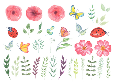 Big Collection watercolor elements - wild flowers, herbs, leaf. Set garden and wild flowers, forest herb, butterfly, ladybug. Illustration isolated on white background, botanic nature.