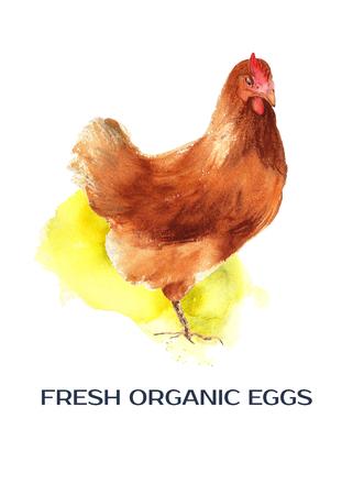 Chicken on the yellow spot. Poster FRESH ORGANIC EGGS. Stockfoto