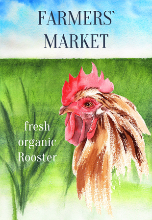 Rooster on the natural landscape. Poster farm animals watercolor. Stockfoto