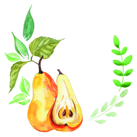 Arrangement watercolor pear. Bio sweet fruit.